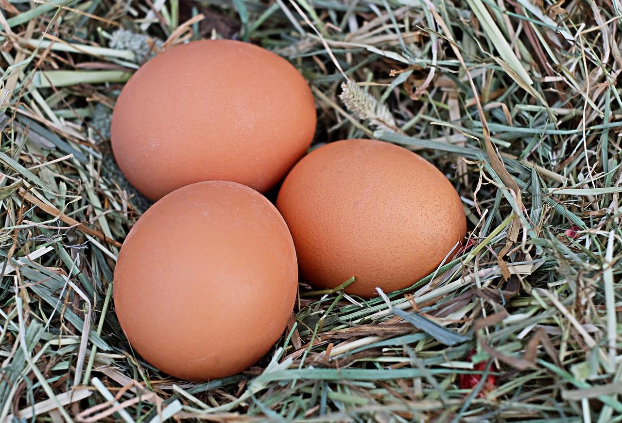 uova bio-si grazie-uova