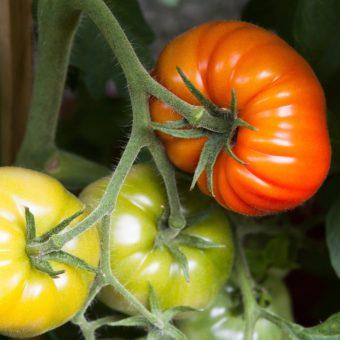 pomodoro-cibo funzionale