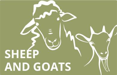 ICONA-sheepGoats