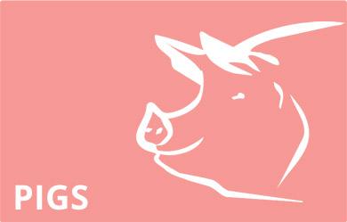 pigs-immagine