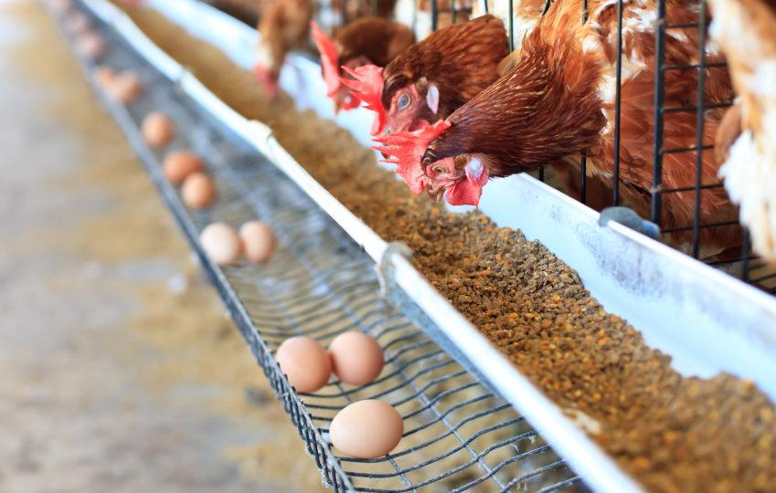 alimentazione animale