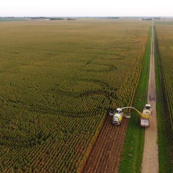 conservazione foraggi-campo coltivato