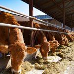 ISMEA_covid19_rapporto settore agroalimentare