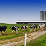 Zoo Assets_dopo covid-19 razione bovine da latte