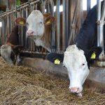 Zoo Assets_colina ruminoprotetta nelle vacche da latte